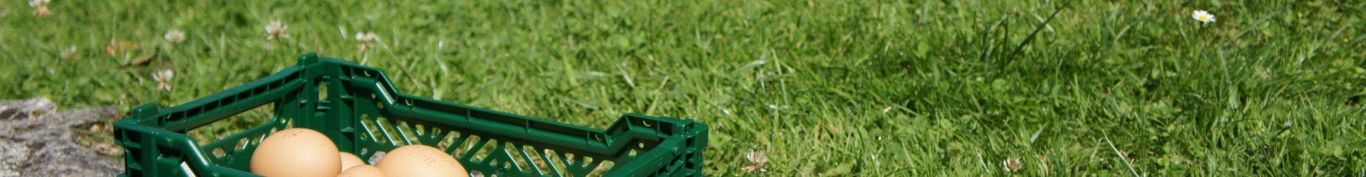 Контейнеры складывающиеся пластиковые — удобные и практичные